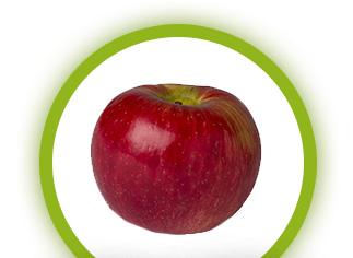 apple-honey-crisp